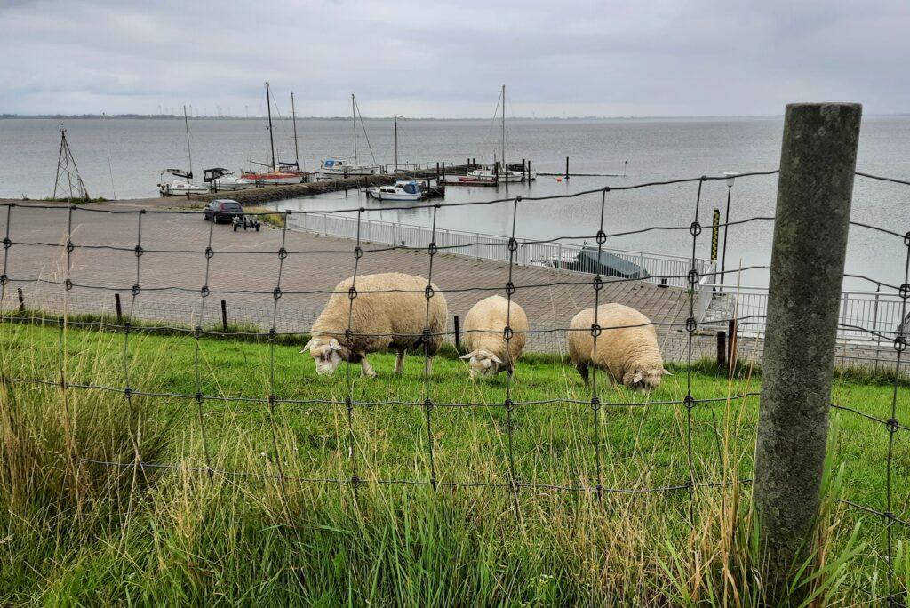 Hafen von Eckwarden